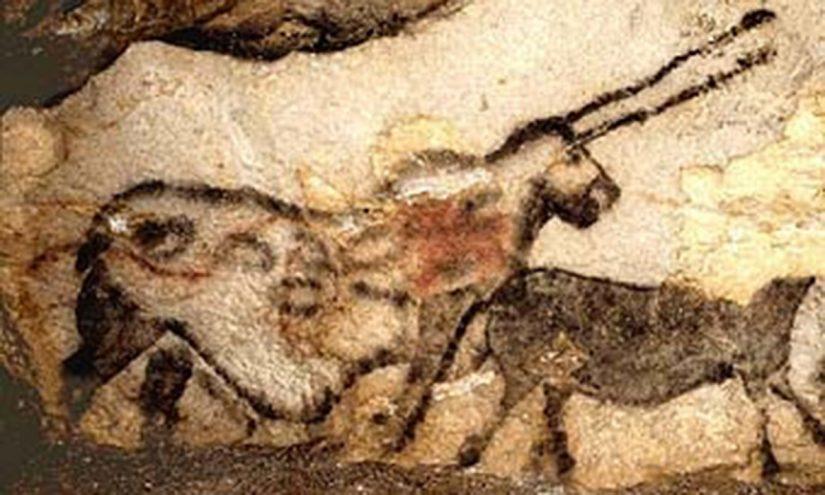 Un fungo killer nella grotta di Lascaux