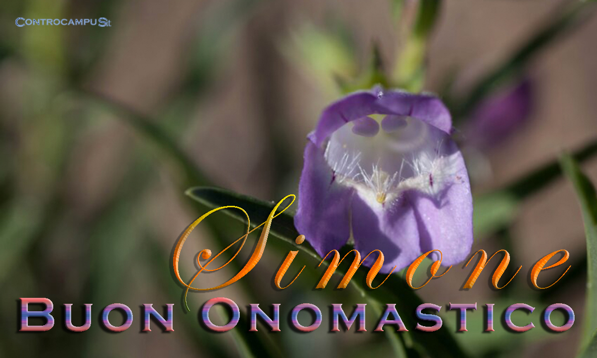 Immagini auguri buon onomastico per San Simone