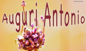 Immagini Auguri Onomastico Antonio