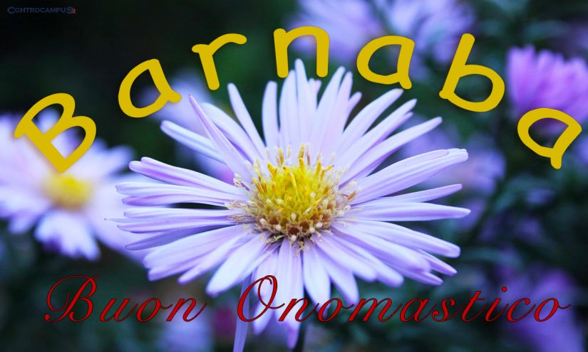 Immagini Auguri Buon Onomastico per San Barnaba