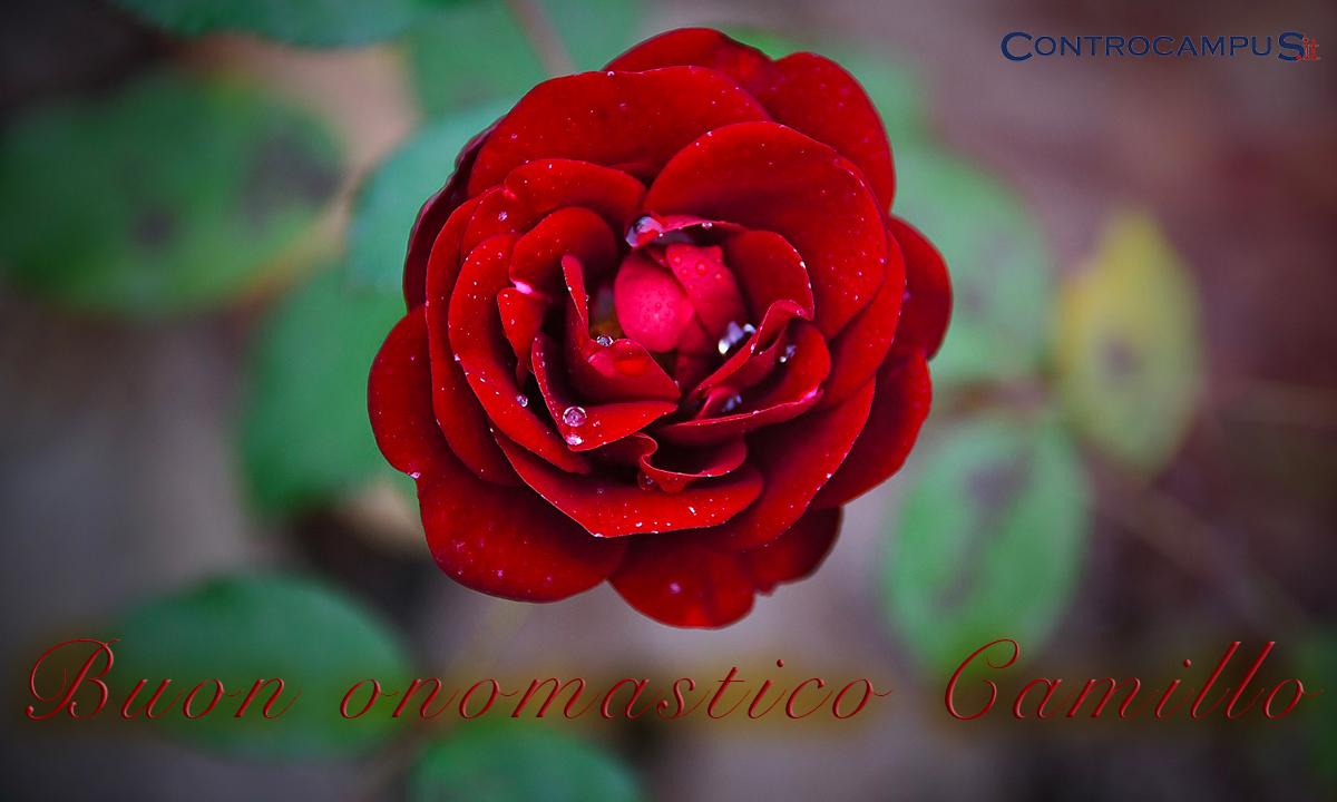 Immagini buon onomastico San Camillo