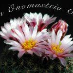Immagini auguri buon onomastico San Chiaro