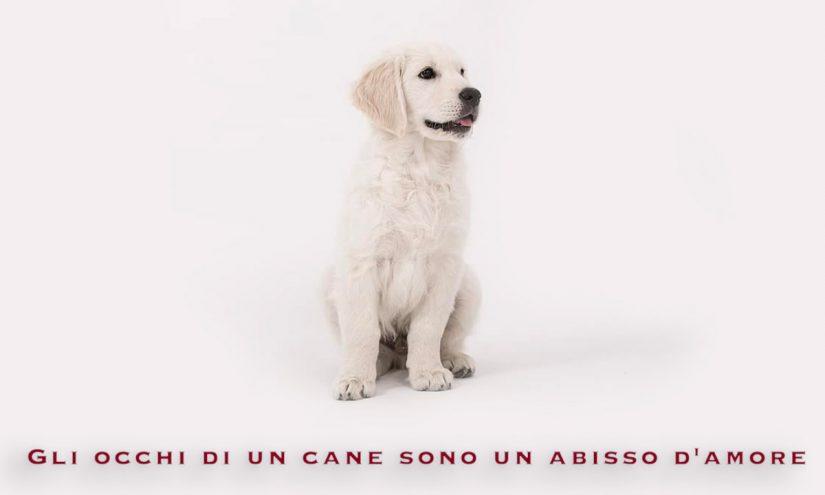 Immagini Giornata del Cane