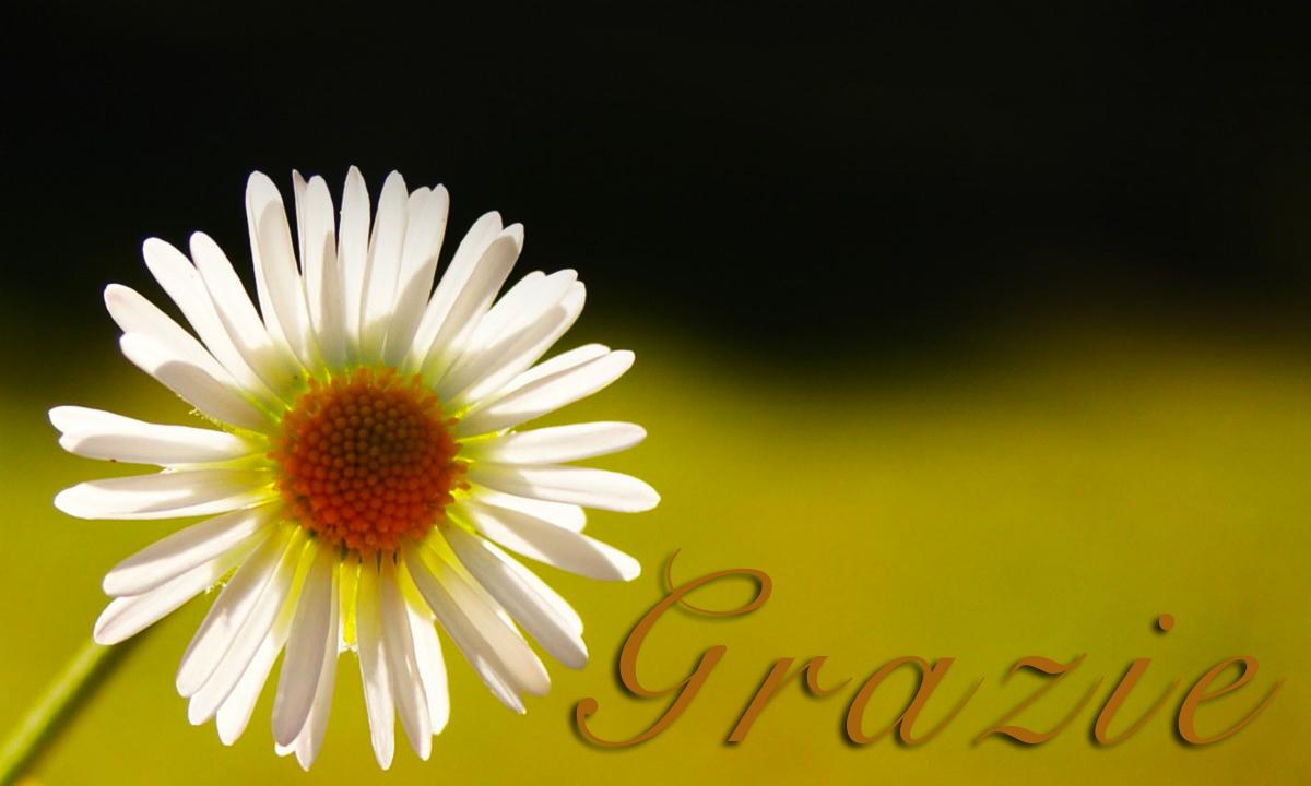 Immagini e frasi di ringraziamento onomastico